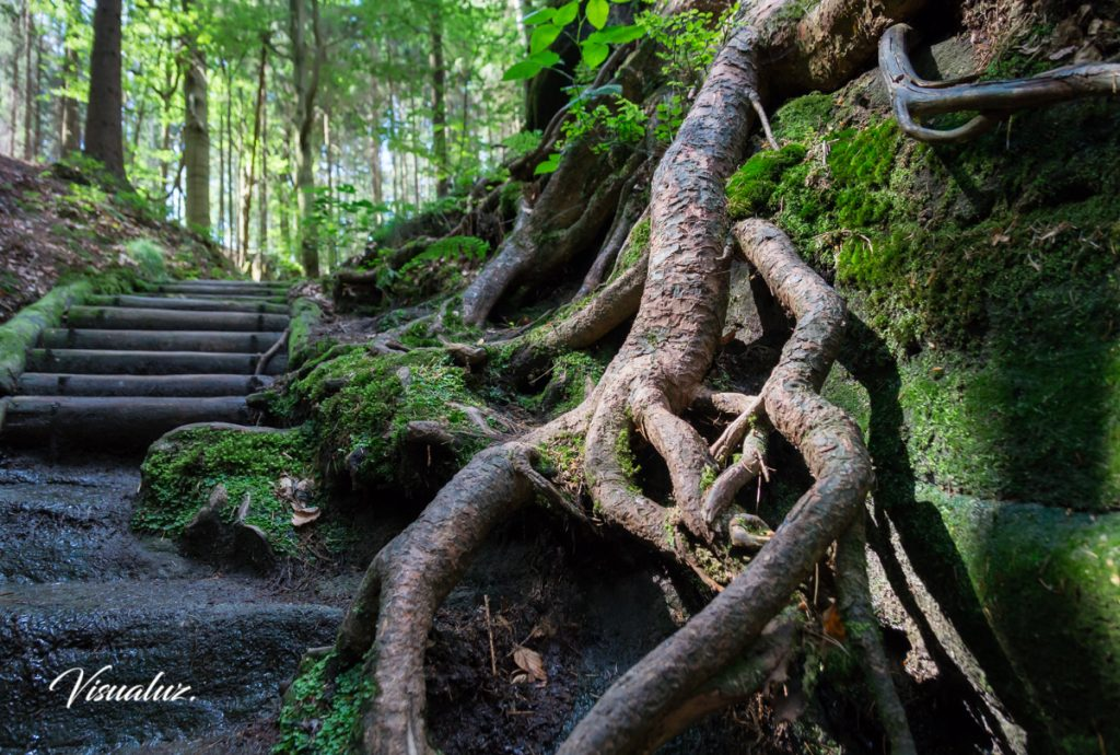 Root and way up