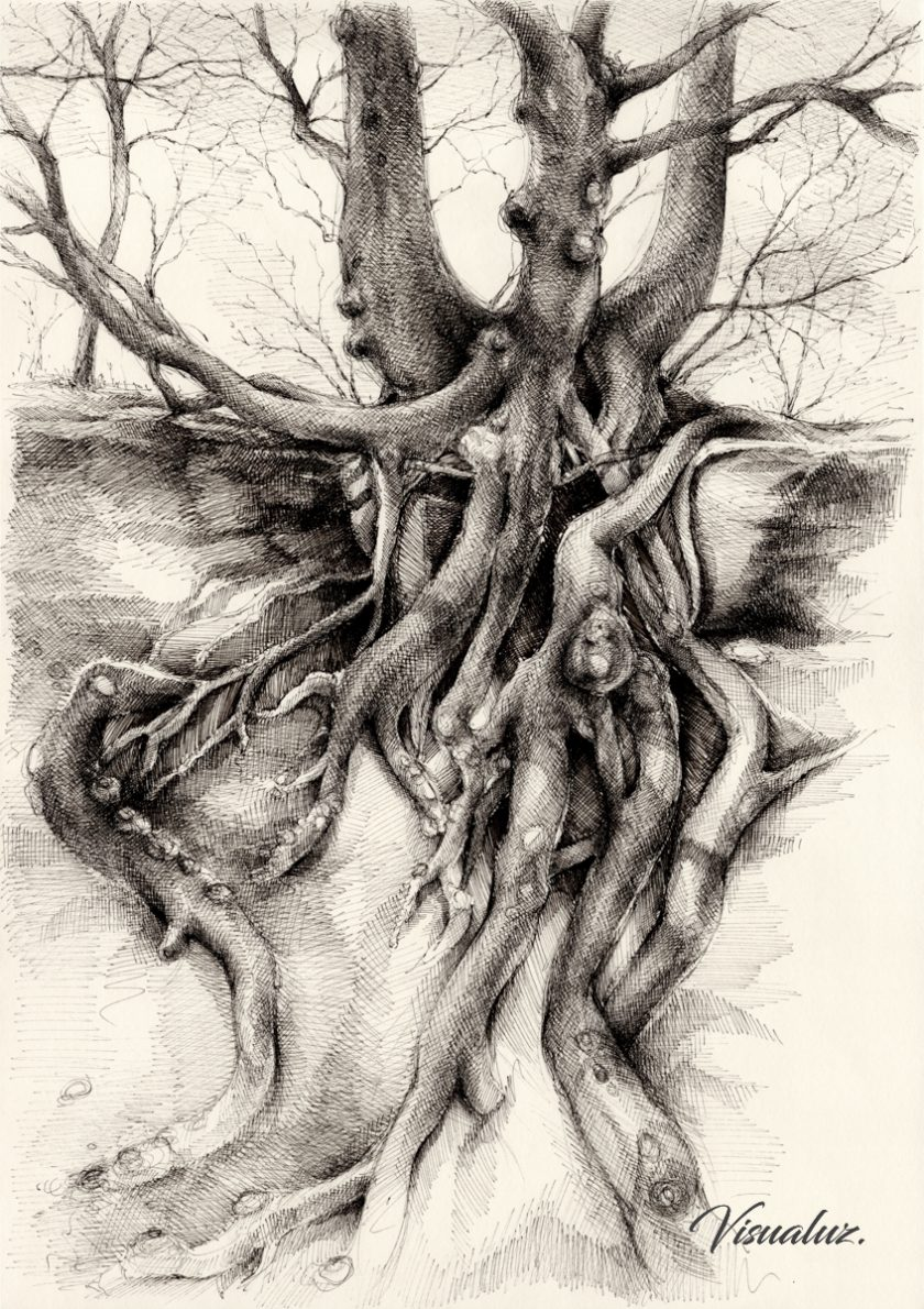 Graceful tree that grows on the sandstone II, drawing, 29,7 x 42 cm