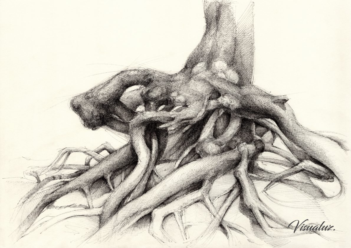 Graceful root in the forest, drawing, 42 x 29,7 cm