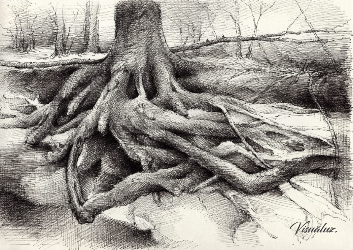 Roots and silent forest VI., drawing, 29,5 x 20,8 cm
