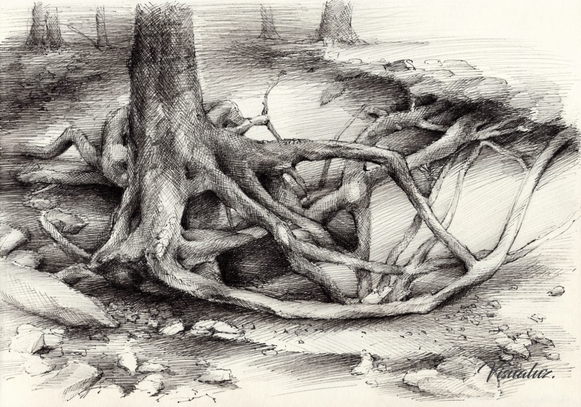 Roots and silent forest V., drawing, 29,5 x 20,8 cm