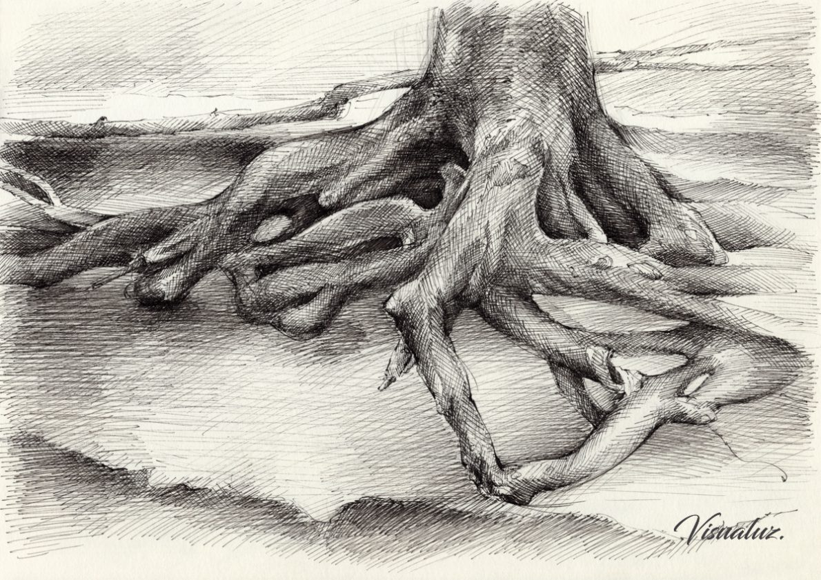 Roots and silent forest III., drawing, 29,5 x 20,8 cm