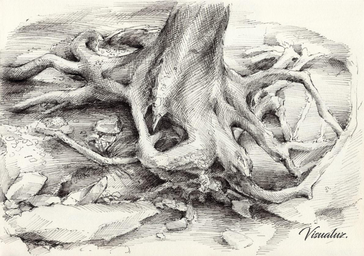 Roots and silent forest II., drawing, 29,5 x 20,8 cm
