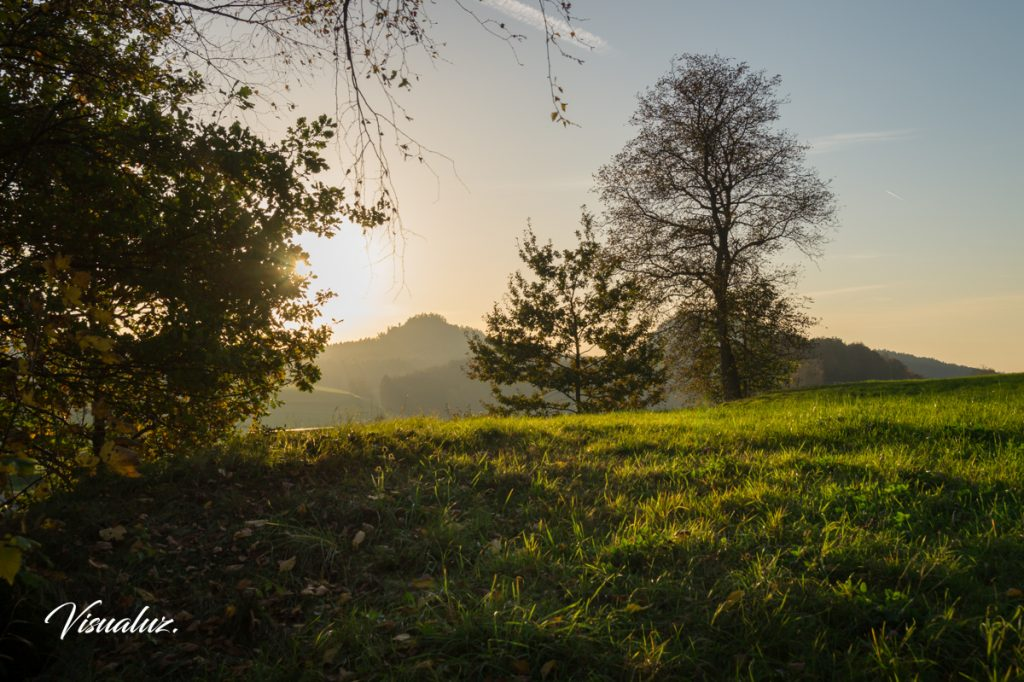 Green meadow and golden light 2