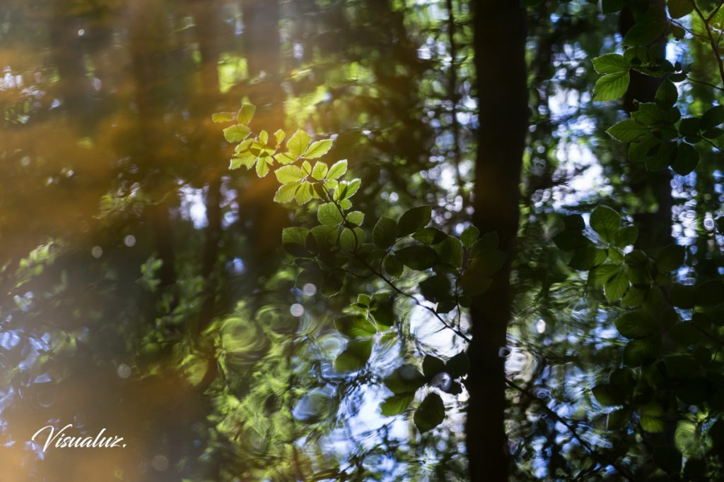 Summer reflection in the forest 2
