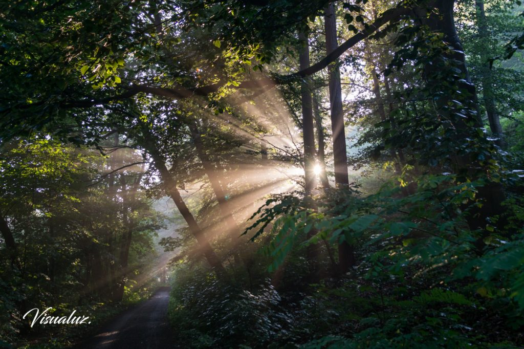 Magical light in the forest