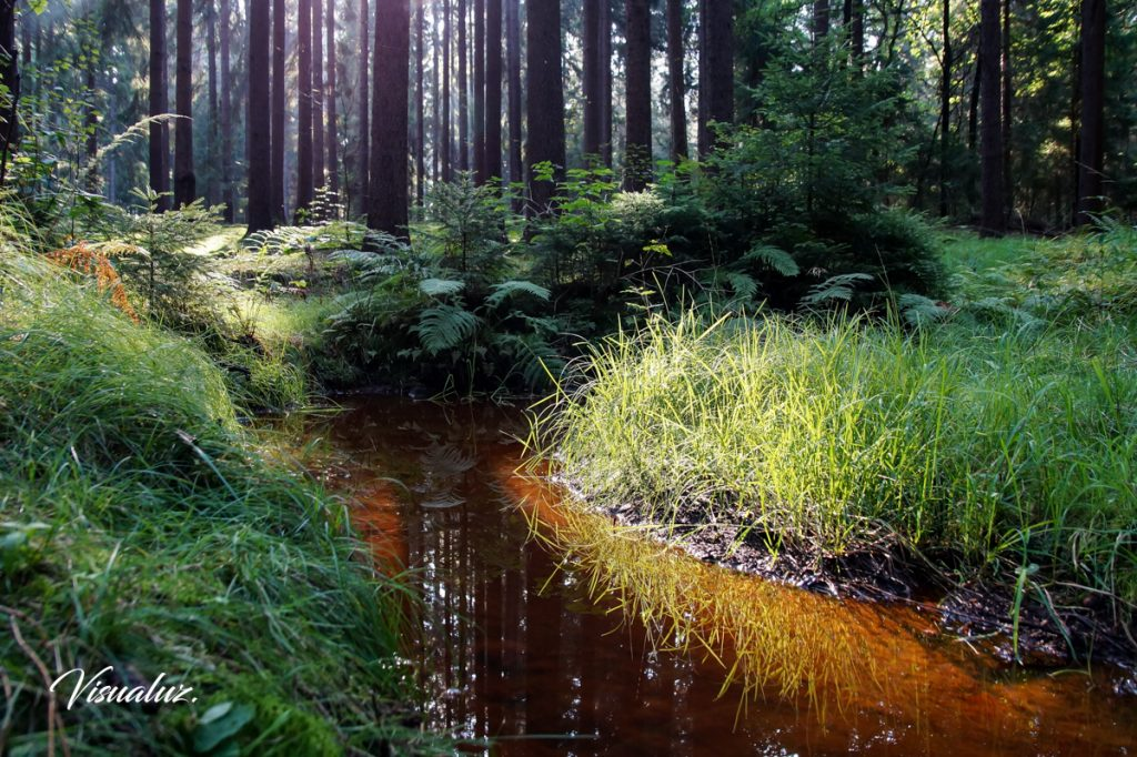 Green grass and red-brown water 1